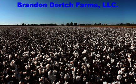 Brandon Dortch Farms, LLC. Logo